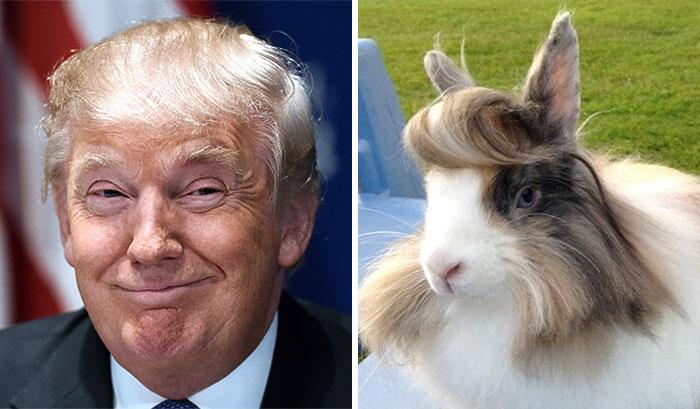 A Rabbit That Looks Like Donald Trump
