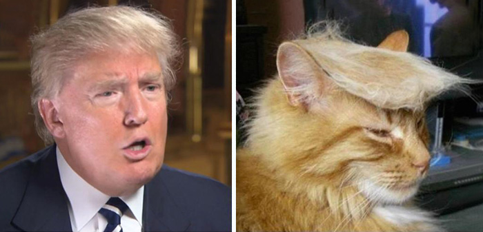 Wish I Had A Cat So I Could Trump It