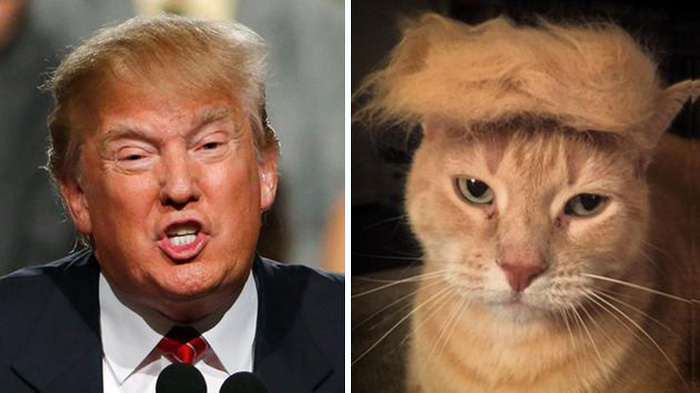 Donald Trump Funny Hair Memes : Things that look just like donald trump bored panda