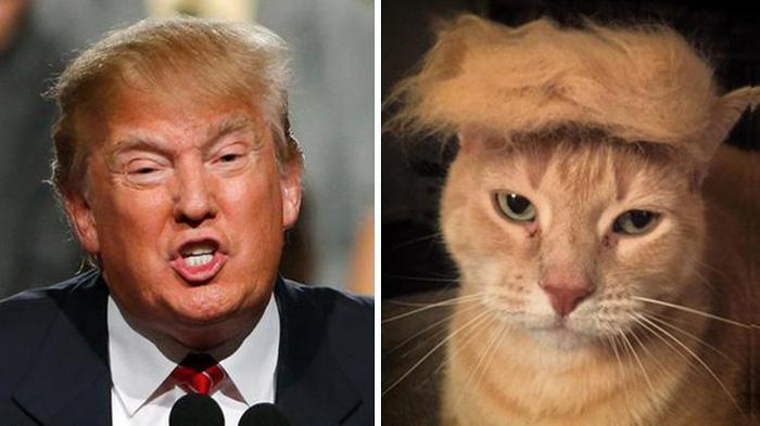 Same Haircuts