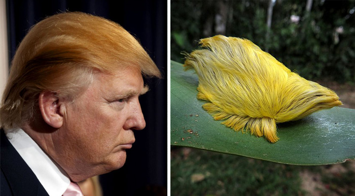 15+ Things That Look Just Like Donald Trump