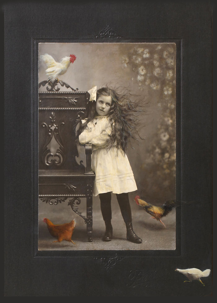 Vintage Photographs With Chickens?