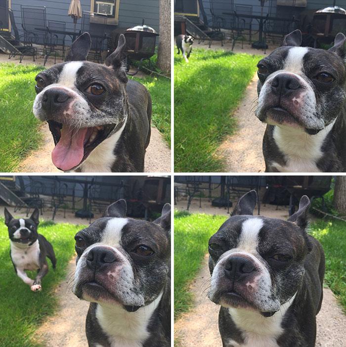 My Dog Walter Hates Max