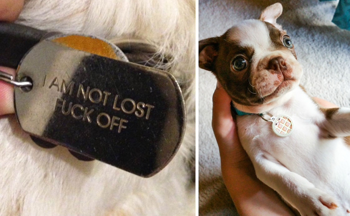 15+ Hilarious Collar Tags For Pets Who Tend To Get Lost