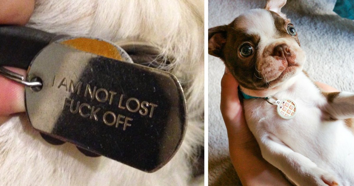 15 hilarious collar tags for pets who tend to get lost bored panda