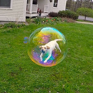 This Freeze-frame Trapped My Dog In A Bubble