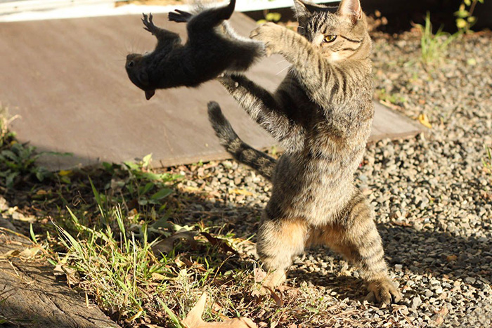Cat Throwing A Squirrel