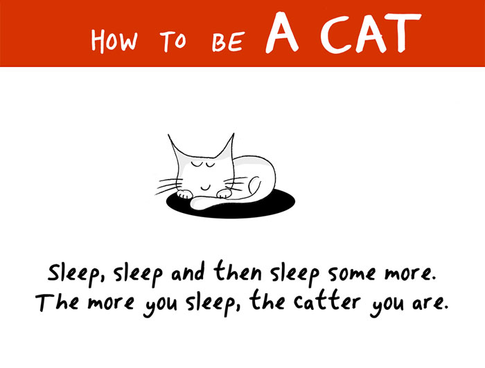 How To Be A Cat (97 pics)