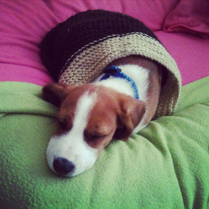 Sleeping Nugget