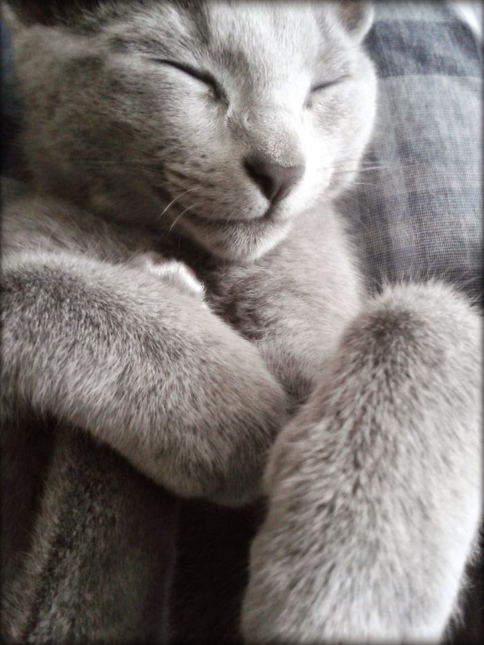 She's One Happy Kitty