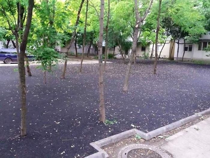 Asphalt Trees