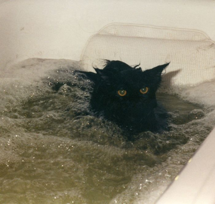 The Cat That Loved The Jacuzzi