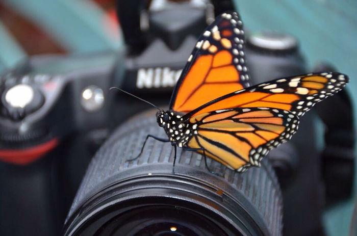 Credit: Crphotography, 2014. Taken At Huntsville, Ala.'s Botanical Gardens' Butterfly Room.