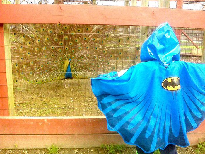 kid-jacket-batman-challenge-peackock-farm-zoo-1