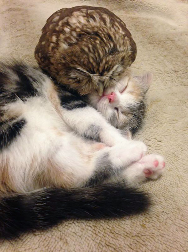 kitten-owl-best-friends-fuku-marimo-hukulou-coffee-japan-2