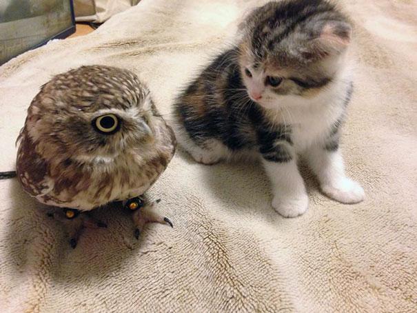 kitten-owl-best-friends-fuku-marimo-hukulou-coffee-japan-4