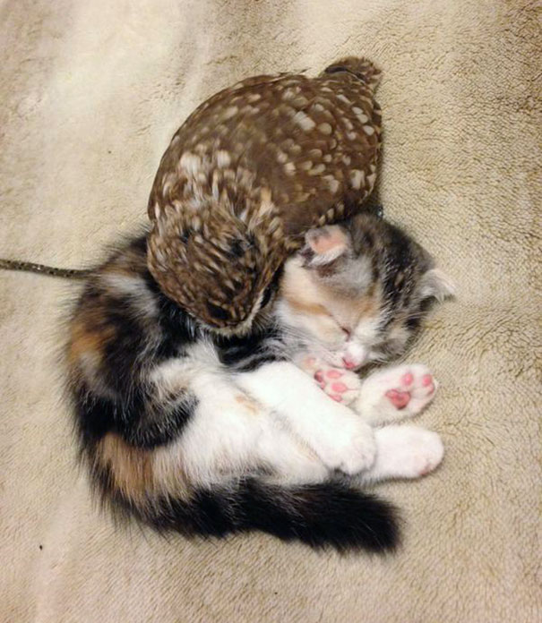 kitten-owl-best-friends-fuku-marimo-hukulou-coffee-japan-6