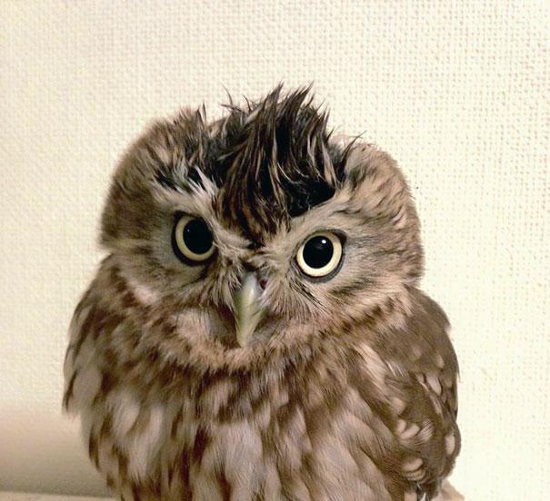 kitten-owl-best-friends-fuku-marimo-hukulou-coffee-japan-7
