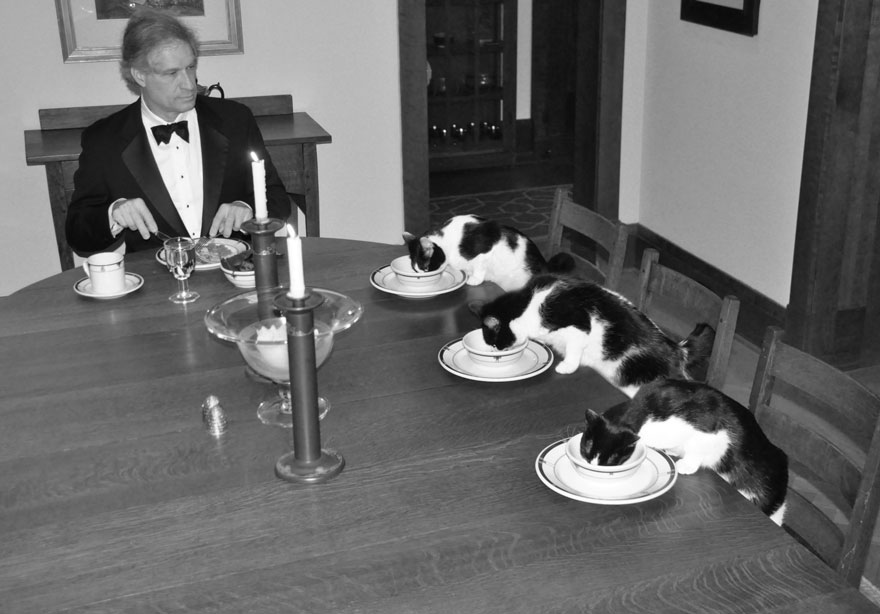 man-fancy-dinner-with-cats-wife-vacation-1