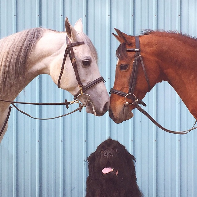 mom-photographs-son-dogs-horse-friendship-stasha-becker-julian-131
