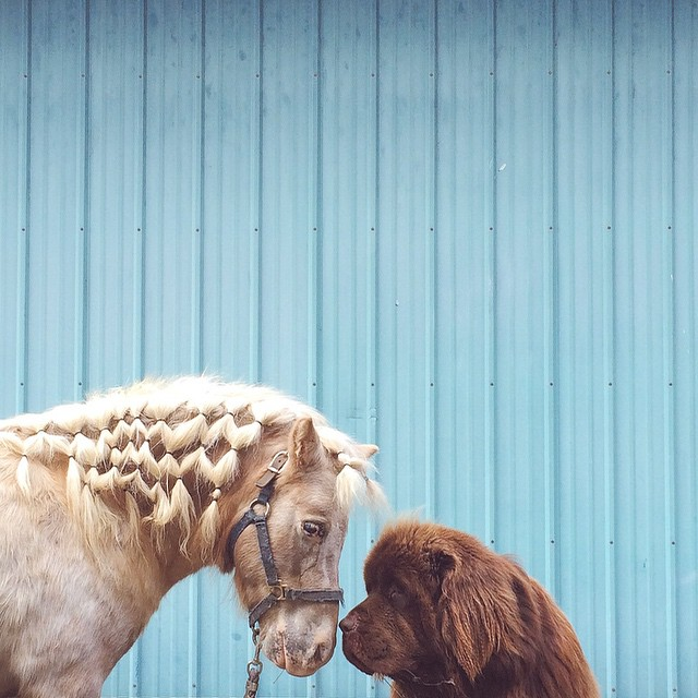 mom-photographs-son-dogs-horse-friendship-stasha-becker-julian-152