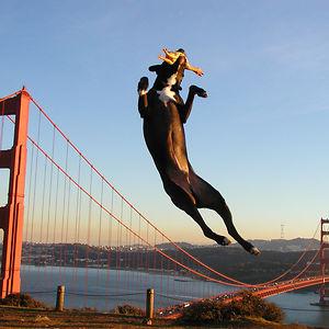 Giant Dog Terrorizing San Fransisco