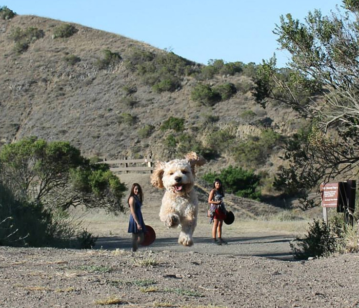 16+ Perfectly Timed Photos That Turn Dogs Into Giants
