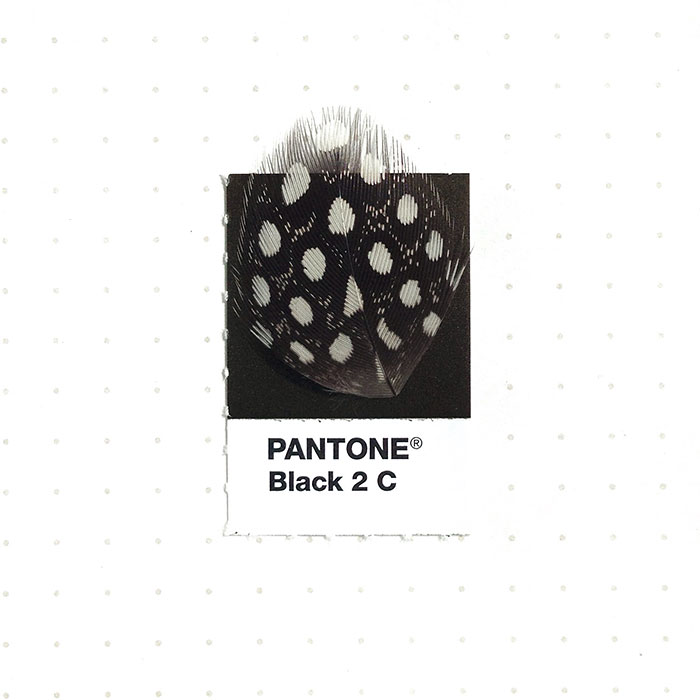 pantone-matching-system-everyday-objects-tiny-pms-project-inka-mathews-houston-texas-20