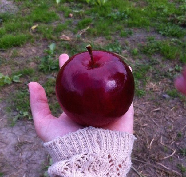 The Perfect Apple