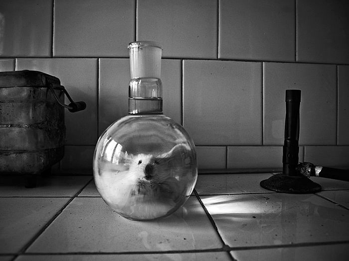 I Combine Photography And Veterinary Medicine Into Art