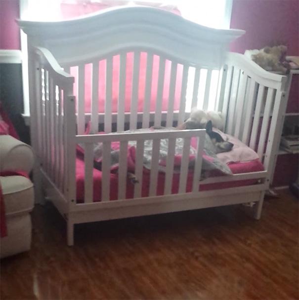 rescued-dog-sleeping-baby-girl-crib-17