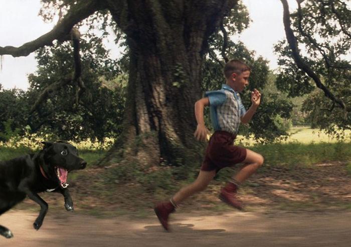 Run Forrest! Run!