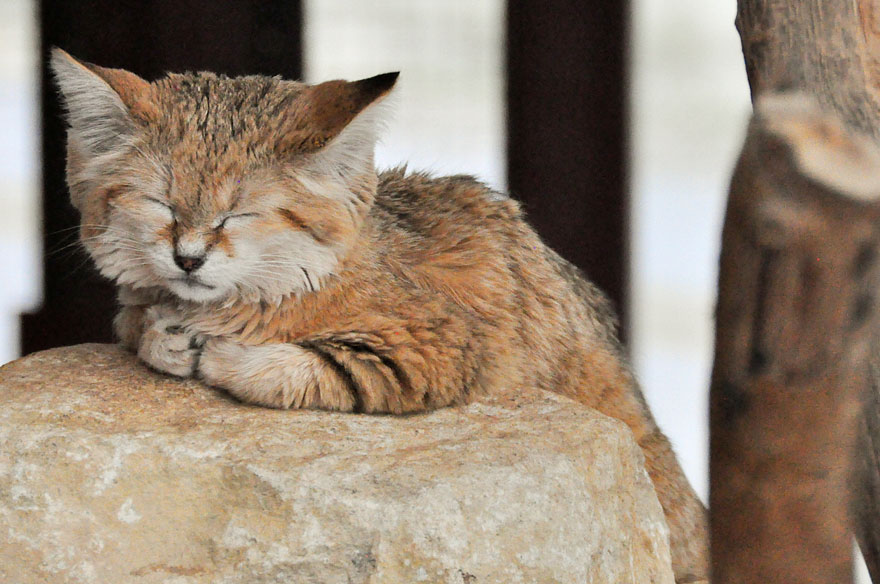Which Is The Best Cat Food For Kittens