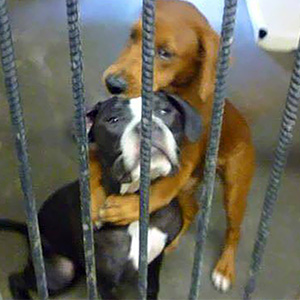 Shelter Dog Hugs Her Friend Hours Before Euthanasia And Saves Their Lives