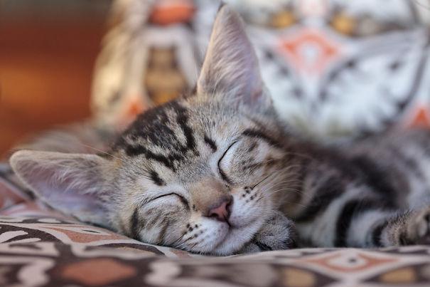 Simba Sleeping