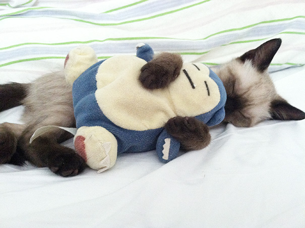 My Kitty With His Favorite Snorlax