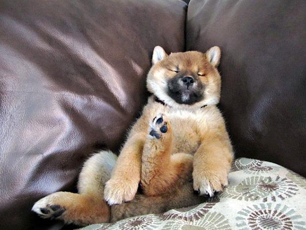 Sleeping Couch Potato