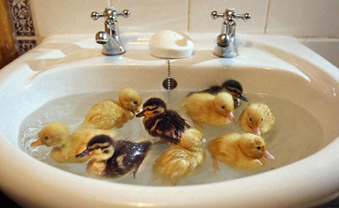 Who Needs A Pond?