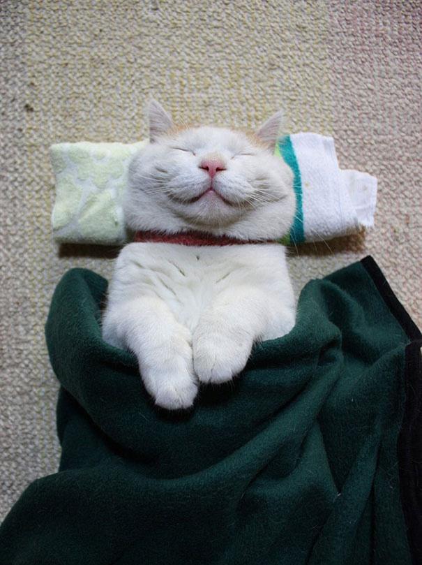 Shironeko Is The Happiest And Sleepiest Cat Ever