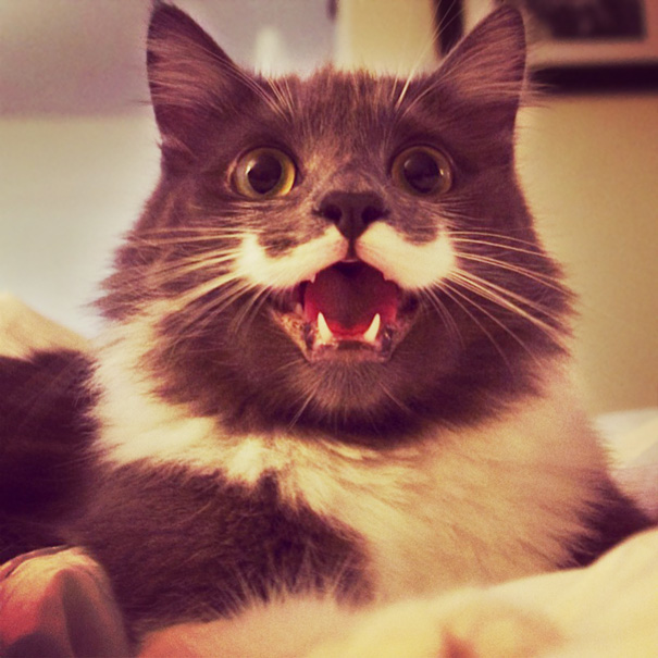 Happy 'stache Cat