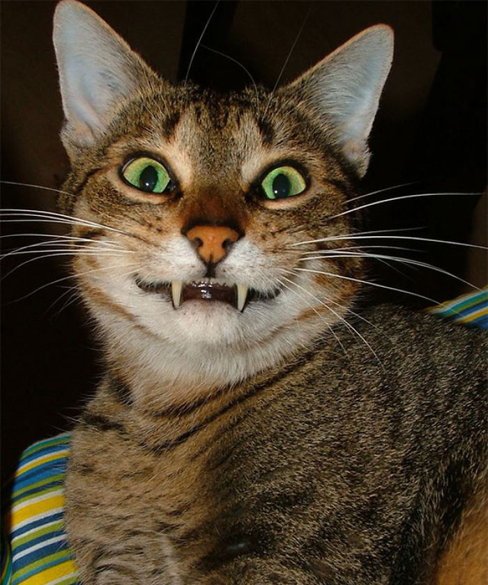 1000+ images about Smile cat on Pinterest   Smiling cat ...   Funny Smiling Cat