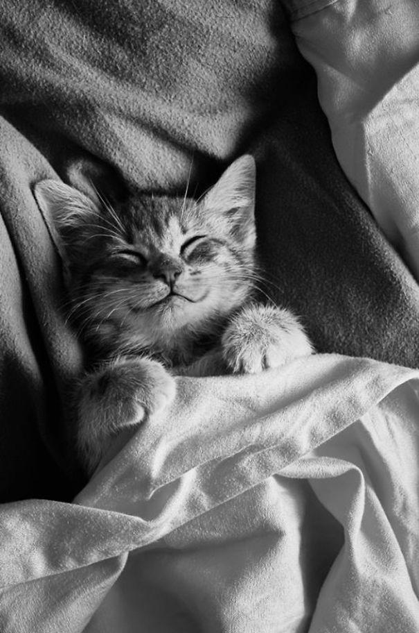 Gato de sorriso