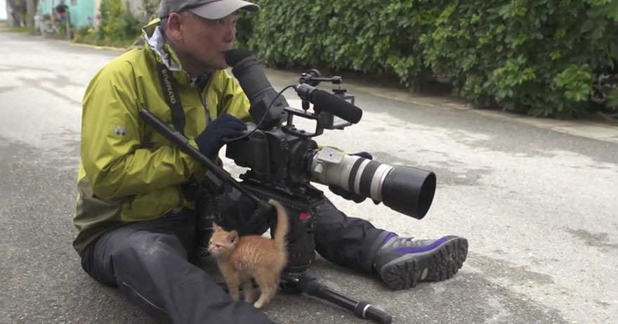 stray-kitten-photographer-Mitsuaki-Iwago-1