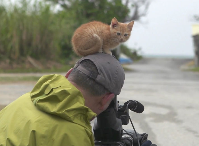 Stray Kitten Befriends Famous Wildlife Photographer By Using Irresistible Cat Tricks