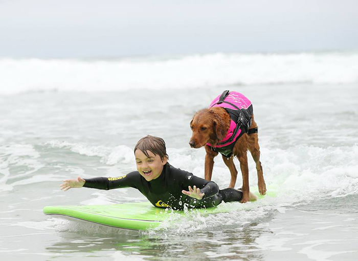 My Therapy Dog Ricochet Surfs With People With Disabilities, Helping Them Heal