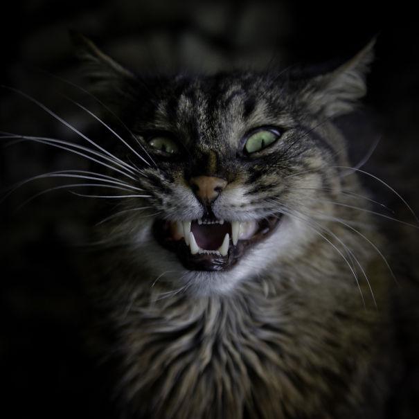 Life.of.meow