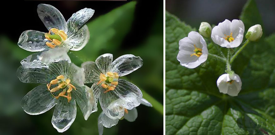 Image result for skeleton flowers