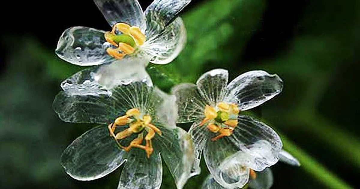 Skeleton Flowers Become Transparent When It Rains Bored Panda