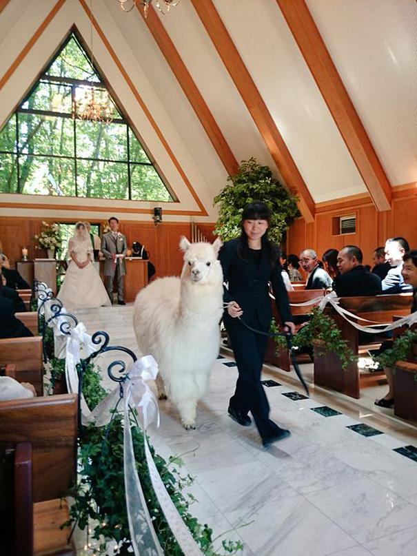 wedding-alpaca-witness-Epinard-Nasu-japan-1