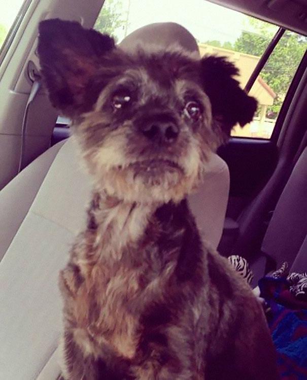 woman-adopts-abandoned-dying-dog-chester-nicole-elliott-1